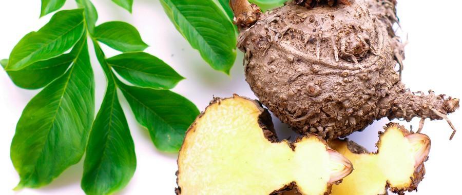La racines de konjac bio pour maigrir